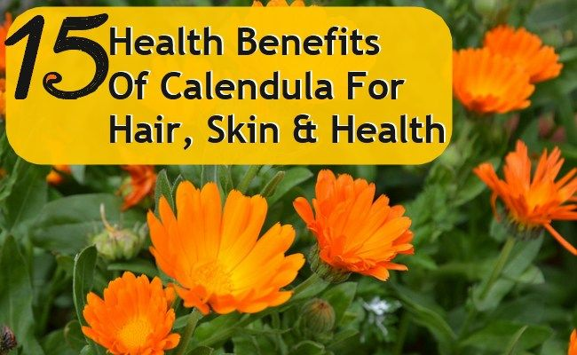 Calendula herb is an amazing herb that has several medicinal properties. It is native to Mediterranean region and is often known as pot marigold. Calendula ...