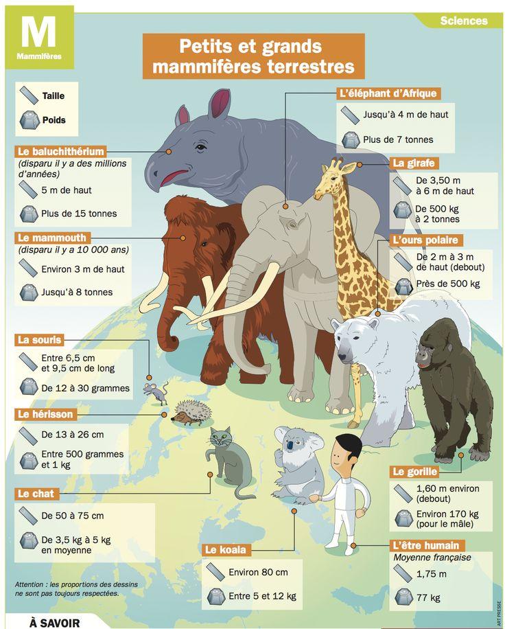 Fiche exposés : Petits et grands mammifères terrestres