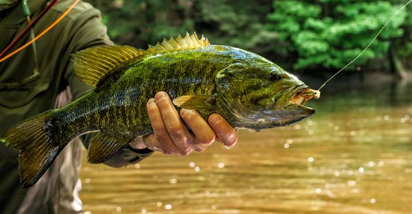Our Top 5 Hottest Fly Patterns for Smallmouth Bass | Outdoor Life