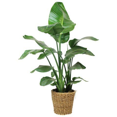 Giardinaggio online vendita online piante e