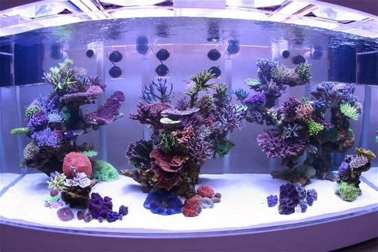 Nice aquascape towers with lots of SPS and clear space behind