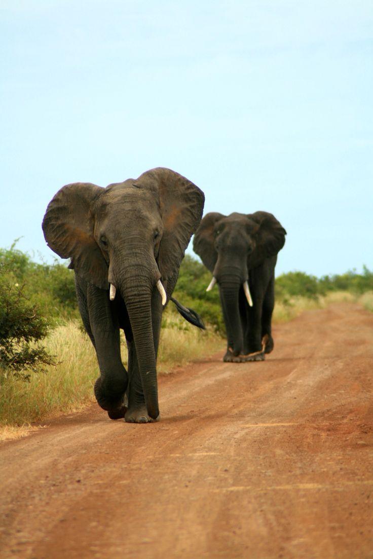 Kruger National Park, ZA
