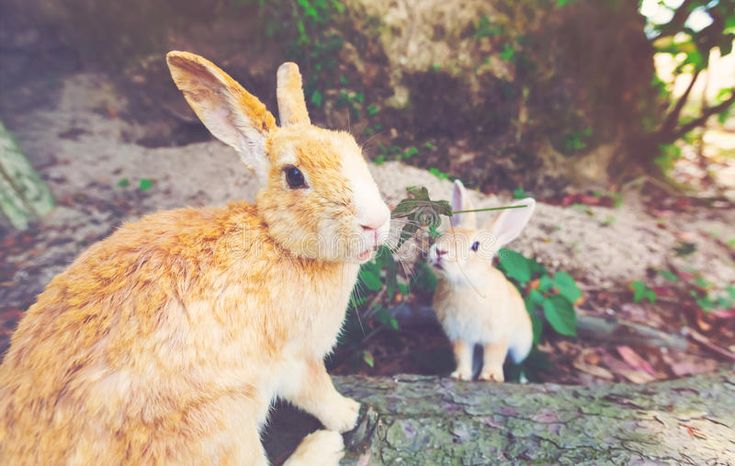 Summer Bunny Ig