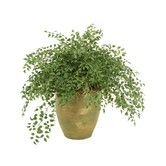 Found it at Wayfair.ca - Smilax Wreathed with Honeysuckle Vines Floor Plant in Pot