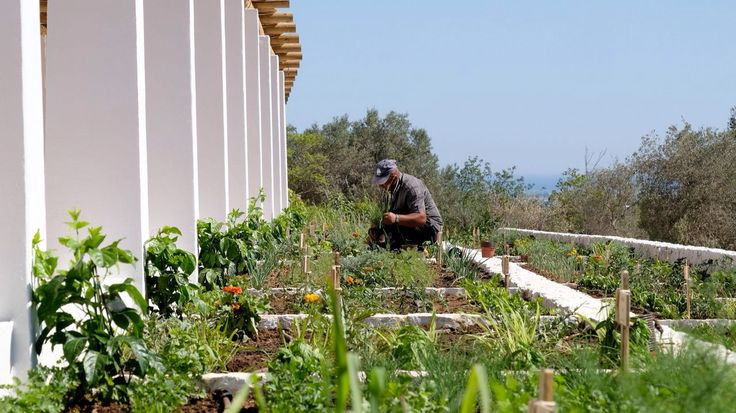 Vila Monte Farm House. Vegetable garden. Algarve. Portugal
