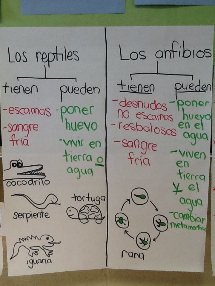animal classification anchor chart: reptile and amphibians ...