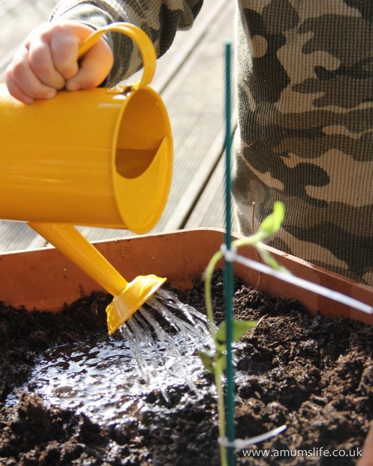 Planting sunflowers, using the Little Man's cute little gardening set.
