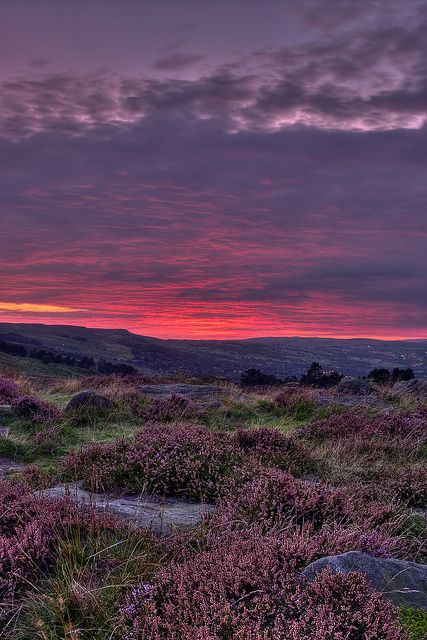 ~~Ilkley Moor At Dusk ~ sunset and heather, West Yorkshire, Northern England by James Whitesmith~~