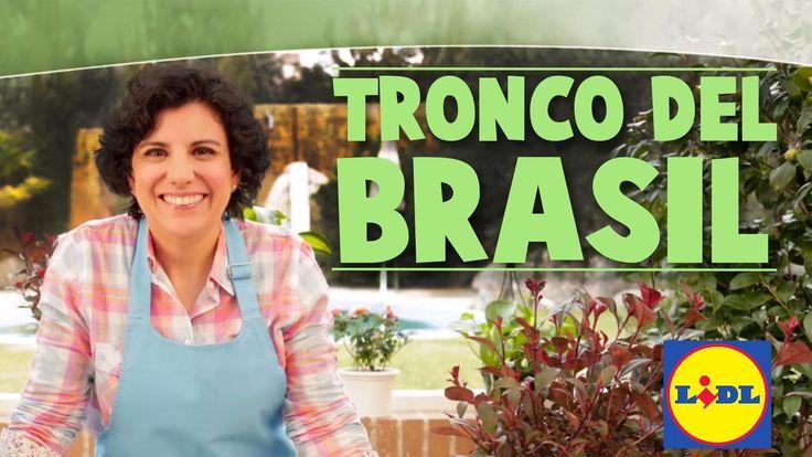 Cuidado Del Tronco Del Brasil - Lidl Jardín