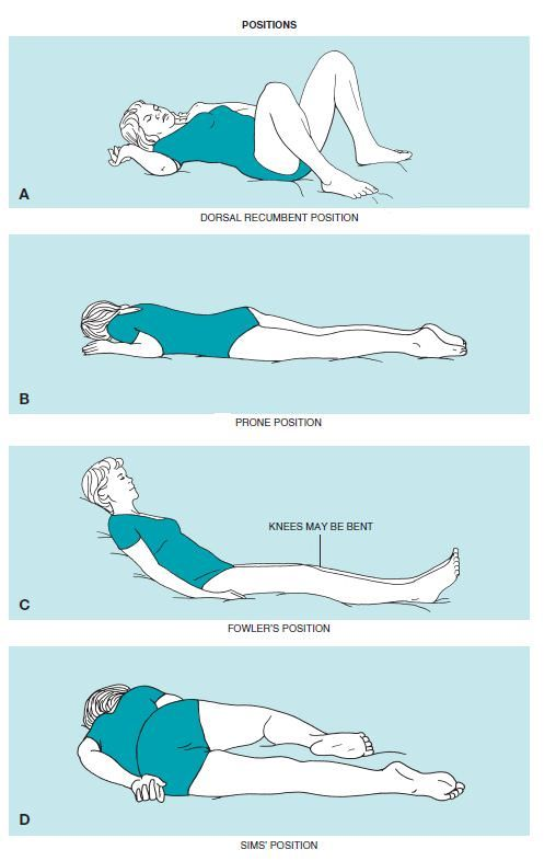 Image result for dorsal recumbent | For school/clinicals:)