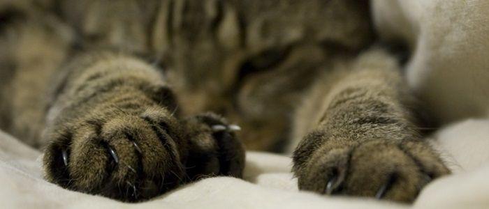 Van linkspotige katten tot unieke vingerafdrukken, in dit blog heb ik een aantal feiten over kattenpoten verzameld.