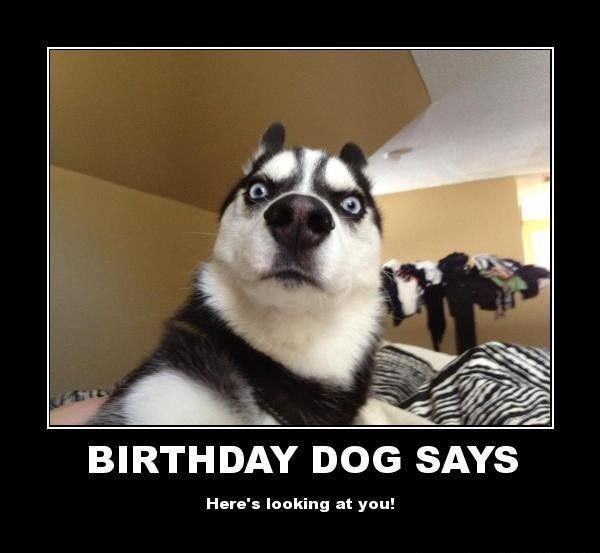 Funny Birthday Memes For Myself : Images about happy birthday meme on pinterest