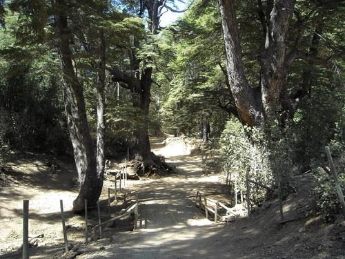 *** RESERVA NACIONAL ALTOS DE LIRCAY <<< Excelente !!   CHILE   reportajes   Reserva Nacional Altos de Lircay