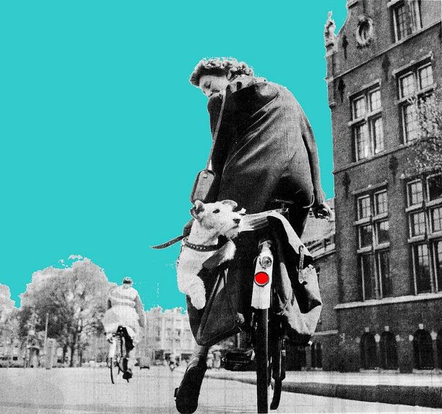 Retro Dog Transport by Mikael Colville-Andersen, via Flickr