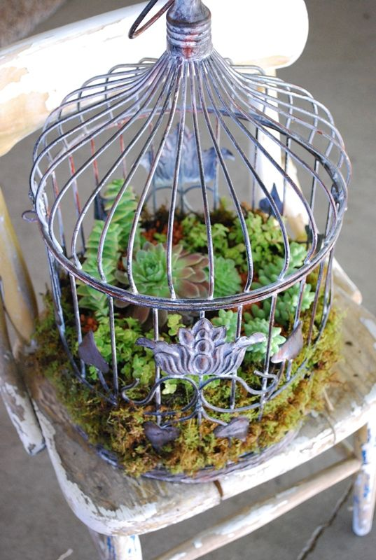 succulents in a bird cage