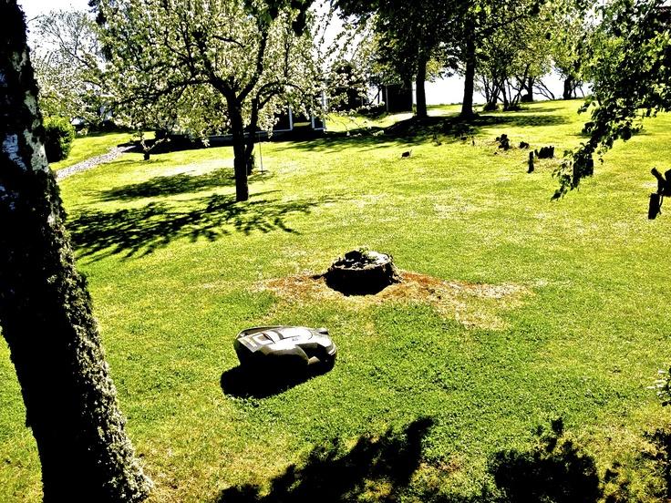 Self-mowing lawnmower on Visingo Island