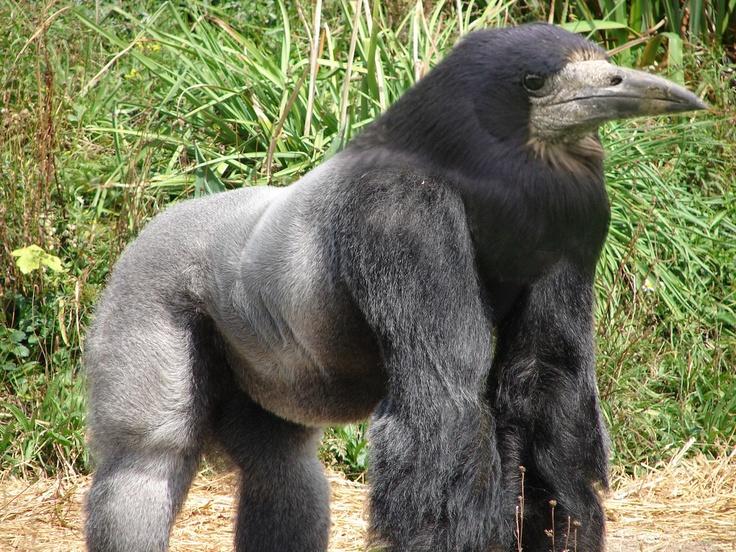 The Goraven Hilarious Animal Hybrids Pinterest The o