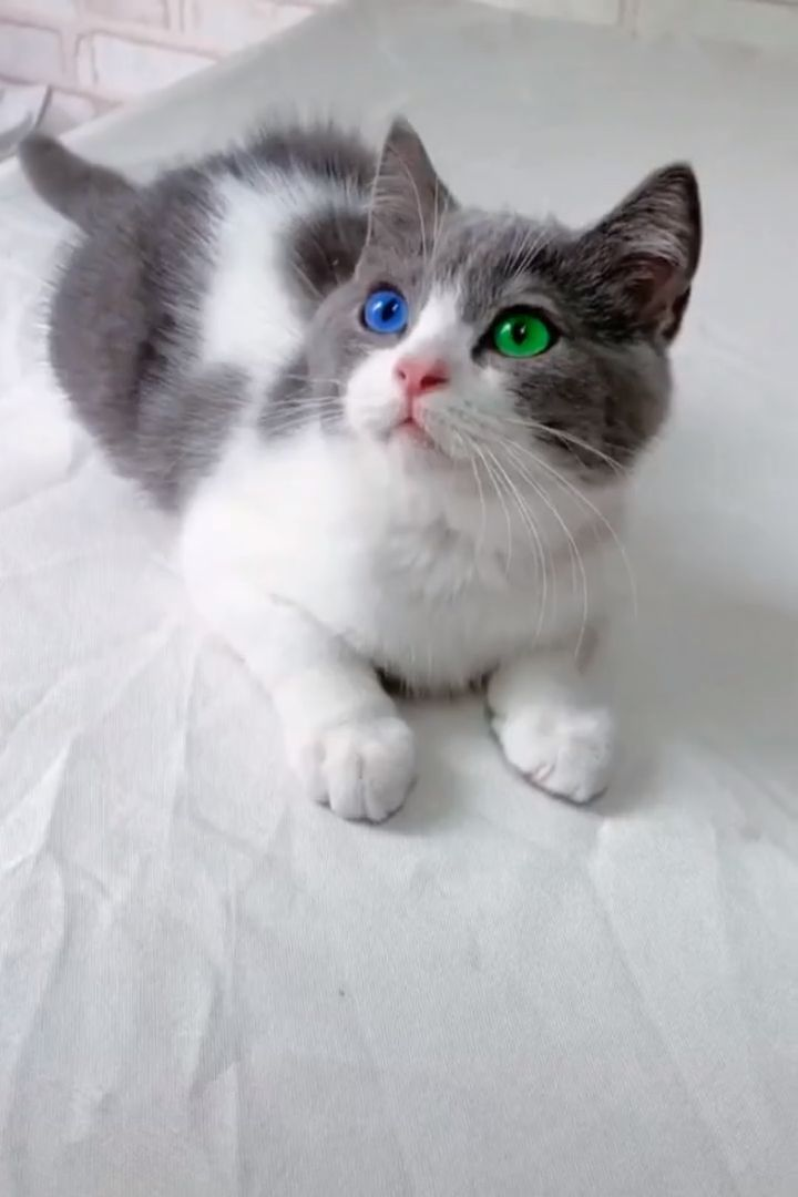 Look At That Eyes Eyes Cute Cats Kittens Cute Baby