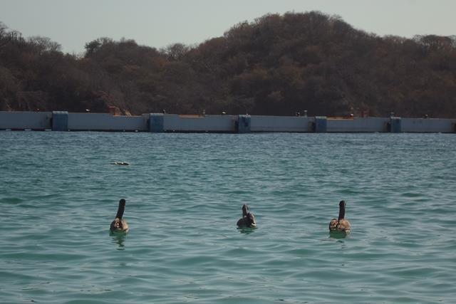 Título de la Obra:Finding Nemo Ducks Autor: Bastida Colin Vanessa. Fecha de realización: 02/01/2015. Apertura de diafragma: f5. Velocidad de obturación: 1/200 ISO: 100. Distancia focal: 20m.