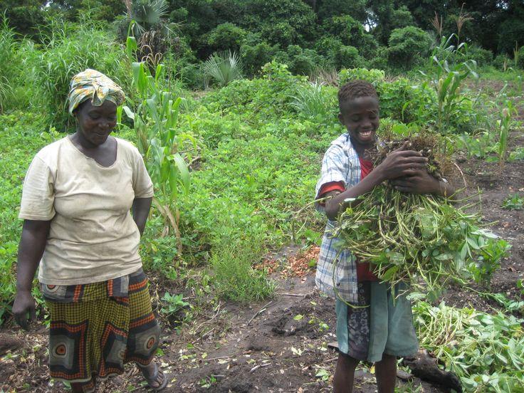 Oltre il 23% della popolazione del Malawi è malnutrito. HUMANA interviene nel distretto di Chickhwawa, per incrementare e diversificare la produzione agricola e formare i piccoli agricoltori su tecniche agricole sostenibili e a promuovere la parità di genere.  http://www.humanaevents.org/HPPDay2014/progetto.html