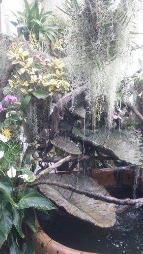 Mais de 1000 imagens sobre I love flowers no Pinterest