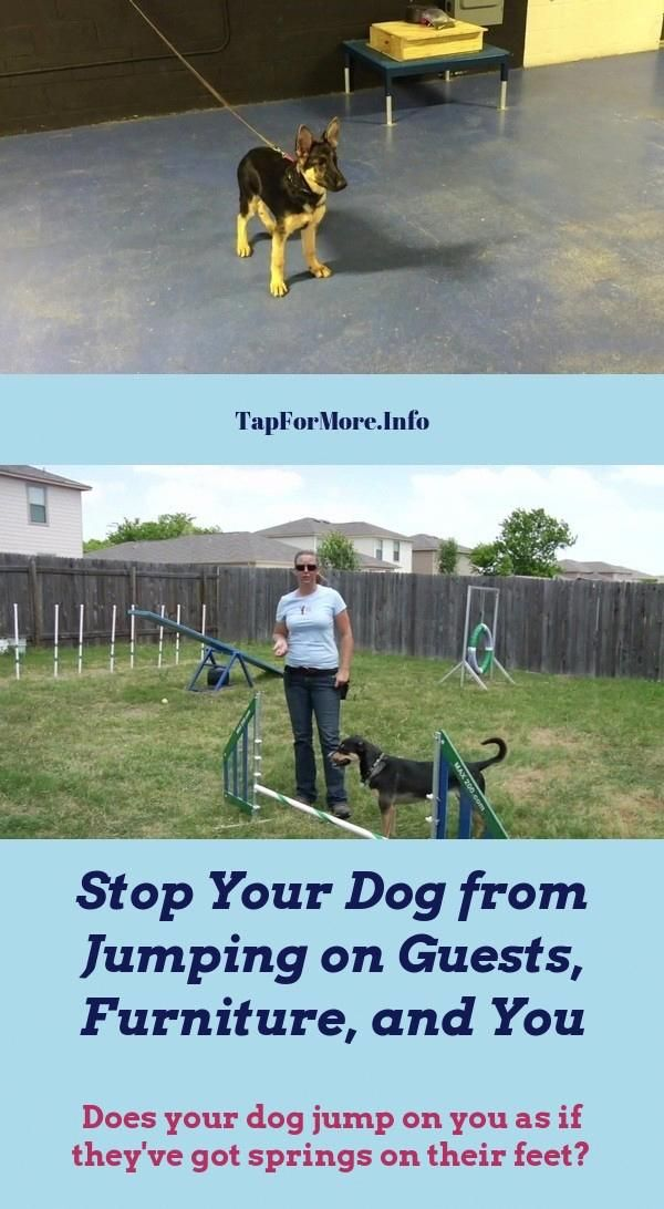 Stop Dog Jumping And Commands To Teach Your Dog Check Pin For