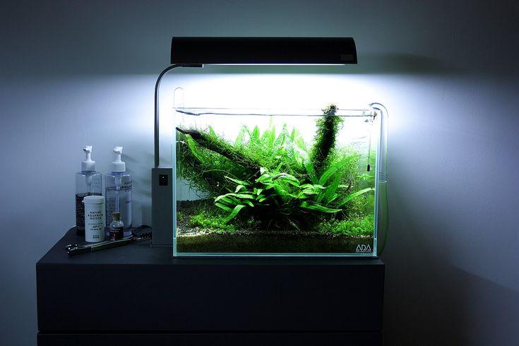 17 best images about planted nano tanks on pinterest for Aquarium cube