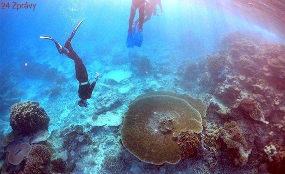 Velký bariérový útes má hodnotu 996 miliard korun, tvrdí studie