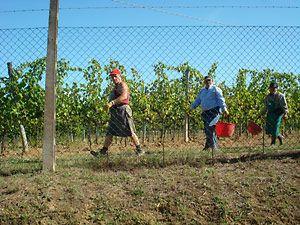 Lungarotti  Umbria wines