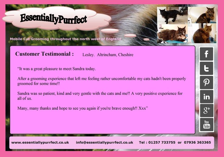 Customer Testimonial of EssentiallyPurrfect #mobile #MaineCoon #cat #catgrooming service.  Lesley #Altrincham #Cheshire