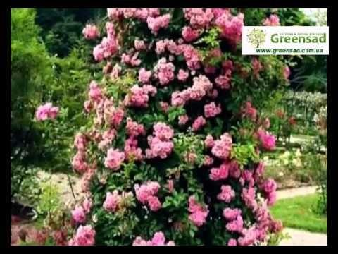 Опора для плетистых роз. Акцент в цветнике - YouTube