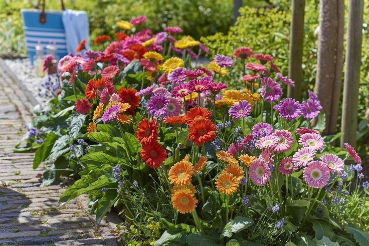 Border met tuin gerbera mix