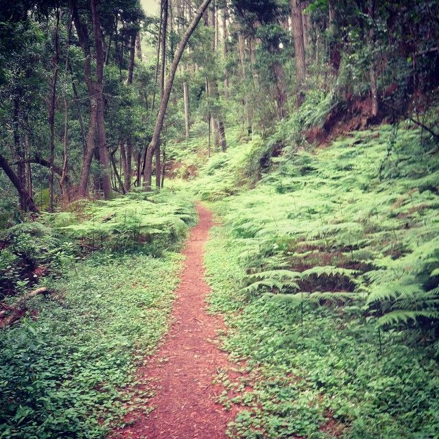 The 25 best small towns in South Africa | SAvisas.com - Hogsback | The Enchanted Forest.