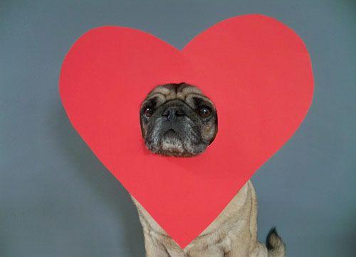 Whut?Whut, Valentine'S, Silly, Cat, Heart, Dogs, Oscars