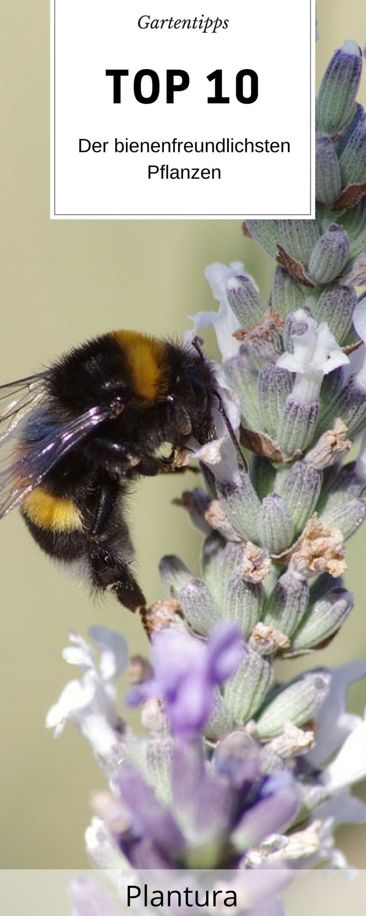 Bee Hair Bienenprodukte Bienen Bienenhaltung