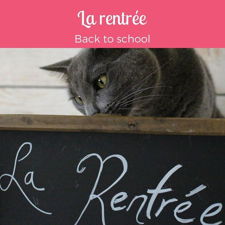 Welcome back to school! Bonne Rentrée à tous et à toutes! How was your first day back?  #frenchwithcats #learnfrench #catsofinstagram #teamminou #frenchlanguage #frenchclassroom #backtoschool #larentree #wordoftheday #motdujour #catphoto #francais #frenchteacher #frenchstudent #polyglot