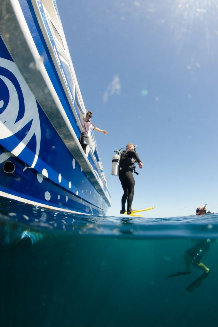 What perfect timing - the scuba diving is walking on the surface!