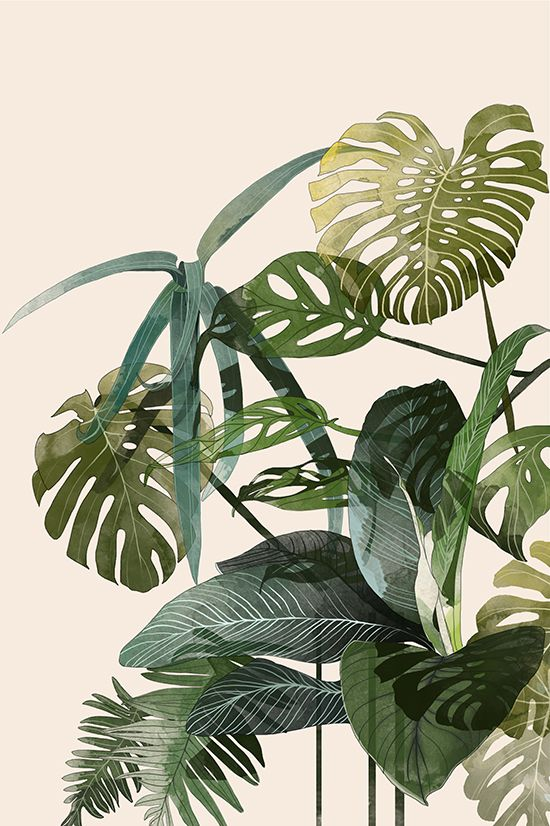 Beautiful art and illustrations of tropical palms and botanicals by Agata Wierzbicka.