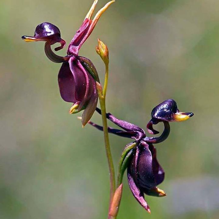 1 Unusual Flowers