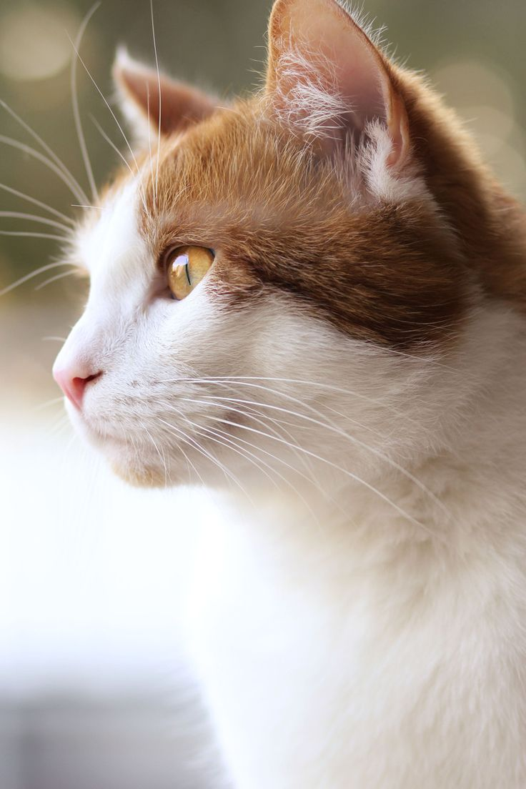Fotografía Cat por Steffi Büschgens en 500px