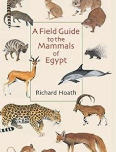 42 best ancient egypt images on pinterest egyptians ancient a field guide to the mammals of egypt free download by richard hoath isbn 9789774162541 fandeluxe Epub