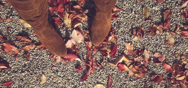 Fall Color: Tobacco