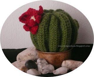 Magnolica: Mi ansiado cactus