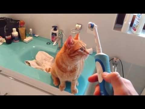 Кот любит массаж от электрической зубной щетки