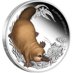 Irresistibly cute coin from a series depicting cute baby animals from the Australian bush | Australian Bush Babies II - Platypus 1/2oz Silver Proof Coin