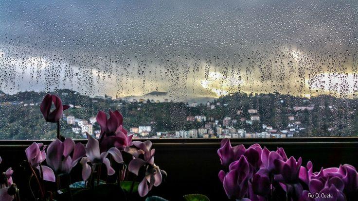 by Rui O. Costa | GuruShots