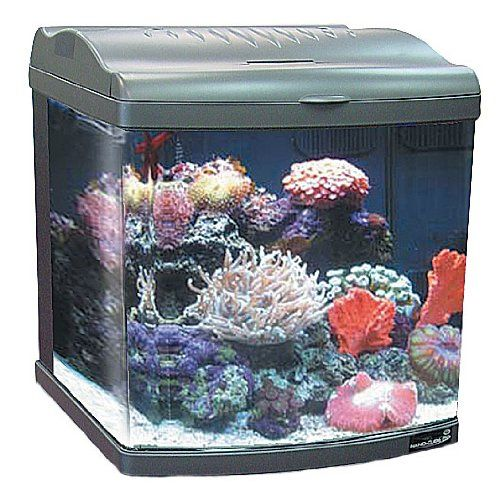 Jbj 24 gallon nano cube deluxe aquarium 2x36w compact for Aquarium nano cube