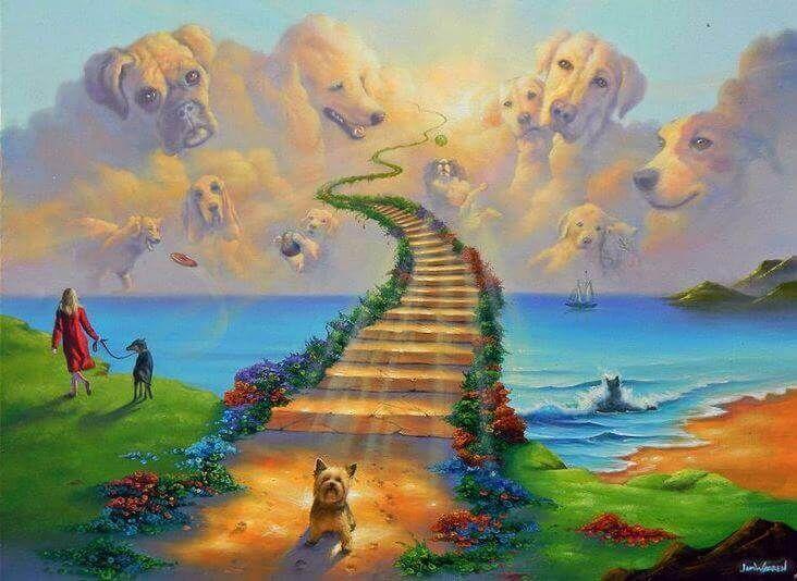A lenda da Ponte do Arco-íris, o céu dos animais de estimação