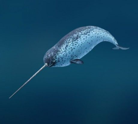 I want to see one the are like unicorns but whales they are amazing and cool.