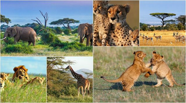 Explore the untamed beauty of Uganda on your Uganda Safaris tours with us the Safari DMC arranging African Safaris featuring wildlife, adventure, culture and leisure holidays in Rwanda, Uganda, Ethiopia, Kenya, Tanzania, Angola and other countries.